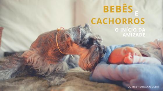 Bebês e cachorros – a adaptação e o início da amizade