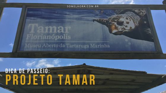 Projeto Tamar Florianópolis – dica de passeio em Floripa!