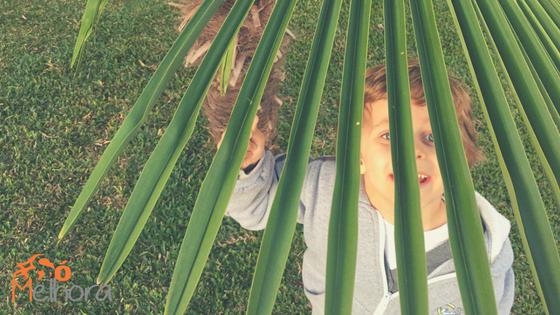 imagem de um menino sob folhas